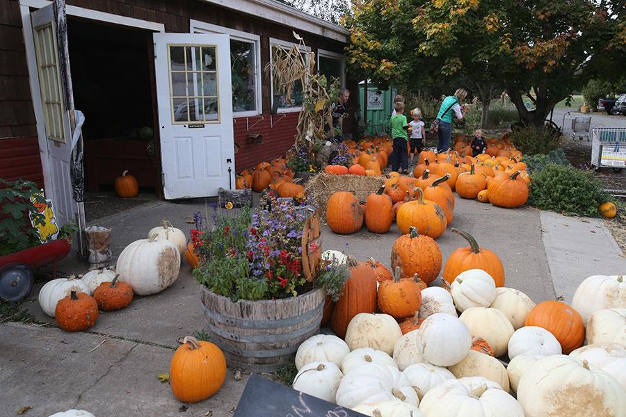 Johnson Vegetable Farms | Pumpkin Patch in Eugene, Oregon